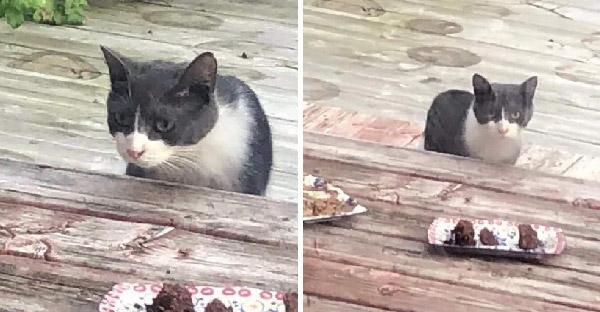 แมวจรจัดเดินตามสองแม่ลูกทาสแมวถึงบ้าน และขอให้พวกเธอช่วยลูกๆของมันด้วย