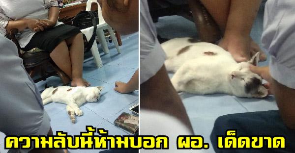 แมวจรจัดตามติดคุณครูที่ช่วยชีวิตถึงห้องเรียน จนเธอต้องกำชับนักเรียนว่าอย่าให้ ผอ. เห็นเด็ดขาด