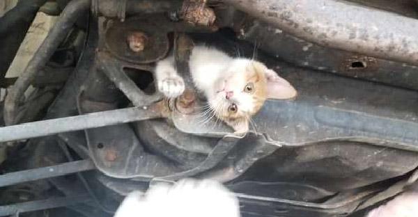 ช่างอู่รถยนต์เจรจากับน้องแมวที่ติดใต้ท้องรถ และสามารถช่วยออกมาได้อย่างปลอดภัย