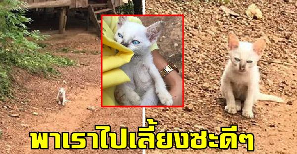 เมื่อครูทาสแมวออกเยี่ยมบ้านนักเรียน เผลอลูบหัวลูกแมวนิดเดียว เดินตามกลับบ้านเฉยเลย