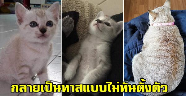 สาวที่ไม่เคยคิดจะเลี้ยงแมวบังเอิญเจอลูกแมวตกจากฝ้า จึงกลายเป็นทาสแมวแบบไม่ทันตั้งตัว