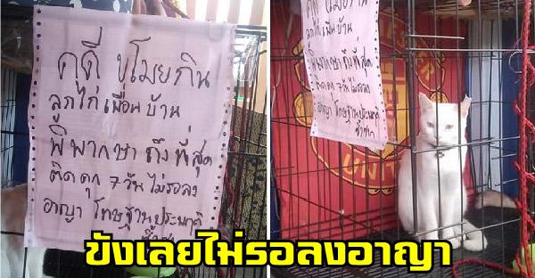 น้องแมวถูกจับฐานขโมยกิน เจอลงโทษจำคุก 7 วัน ไม่รอลงอาญาเพราะเคยก่อเหตุมาแล้ว