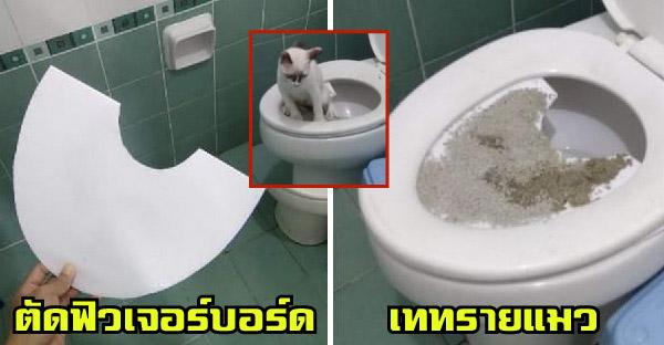 วิธีฝึกน้องแมวนั่งชักโครกภายใน 1 เดือน ทำได้ง่ายมากและประหยัดงบด้วย