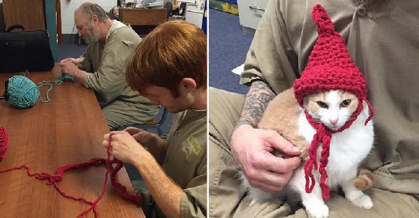 แมวไร้บ้านถูกส่งตัวให้นักโทษเลี้ยง และเปลี่ยนให้พวกเขามุ้งมิ้งกว่าที่เคย
