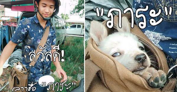 """ซีรี่ย์ตอนแรกของ """"ภาระ"""" น้องหมาที่ถูกเก็บมาเลี้ยง จนกลายเป็นเซเลปโด่งดังบนโลกออนไลน์"""