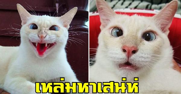 """รู้จัก """"มะลิแมวตาเหล่"""" นิสัยไม่เต็มบาท ส่วนหน้าไม่ได้ดึง มันตึงเอง"""