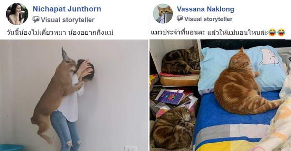 มัดรวมความเฮฮากลุ่มทาสแมว ที่มีเรื่องขำขันได้ทุกวัน