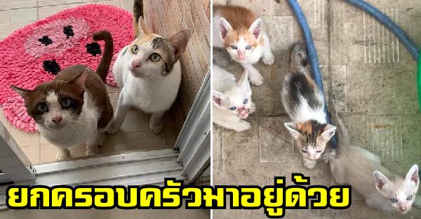 คู่รักแมวจรจัดหอบลูกมาเพียบ เคาะประตูบ้านทาสแแมว ขอมาอาศัยอยู่ด้วย