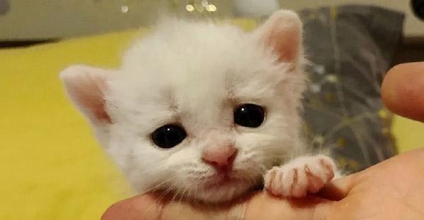 ลูกแมวหูหนวกรอดข้างถนนเพียงลำพัง แต่สองแมวหูหนวกช่วยดูแลและเปลี่ยนชีวิตมันไปตลอดกาล