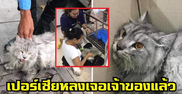 แมวเปอร์เซียตกจากใต้ท้องรถแท็กซี่ สาวช่วยส่งรพ.สัตว์ ประกาศหาบ้านจนเจอเจ้าของที่แท้จริง