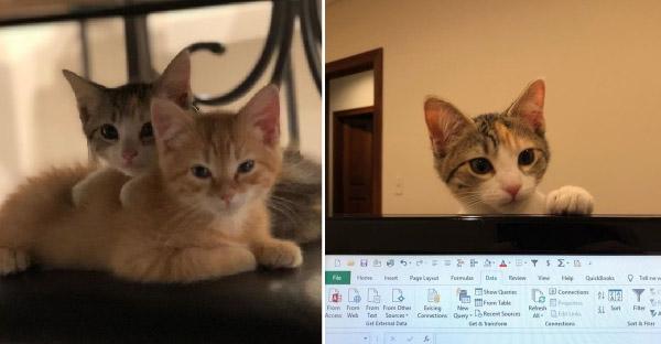 บริษัทขนส่งจ้างแมวสองพี่น้อง ในตำแหน่งผู้บริหารความสุขในองค์กร (^∇^)
