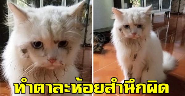 สาวกลับจากทำงานเจอน้องแมวนั่งทำตาละห้อย สำนึกผิดที่แอบไปเล่นโคลนจนเละเทะ