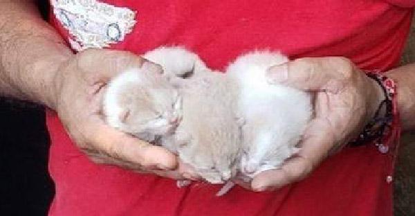 พลเมืองดีช่วยลูกแมวสามตัวจากถังขยะ ก่อนกลับมาวางกับดักพาแม่แมวไปอยู่ด้วย