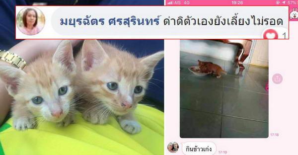 แม่ไม่ให้เลี้ยงแมวแต่ลูกสาวรับมาแล้ว เจอเม้นท์ในเฟซอย่างฮา สุดท้ายแม่กลายเป็นทาสแมวซะเอง