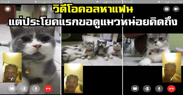 เมื่อแฟนวิดีโอคอลมานึกว่าคิดถึงกัน แต่ประโยคแรกขอดูแมวหน่อยคิดถึงเด็กๆ