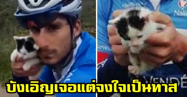 นักปั่นอาชีพบังเอิญเจอลูกแมวข้างถนนระหว่างซ้อมแข่ง และทำให้เขากลายเป็นทาสนับตั้งแต่นั้นเป็นต้นมา