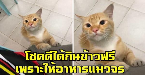 นักศึกษาโชคดีได้กินข้าวฟรี เพราะมีคนใจดีเห็นว่าให้อาหารแมวจรจัด