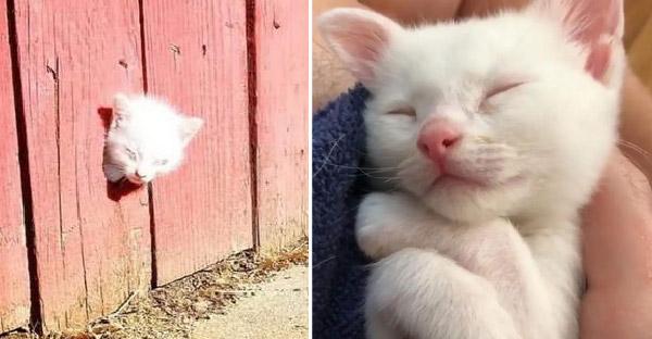 พลเมืองดีพบลูกแมวตามองไม่เห็นลอดหัวเข้ามาในรั้ว และมันไม่ได้อยู่เพียงลำพัง