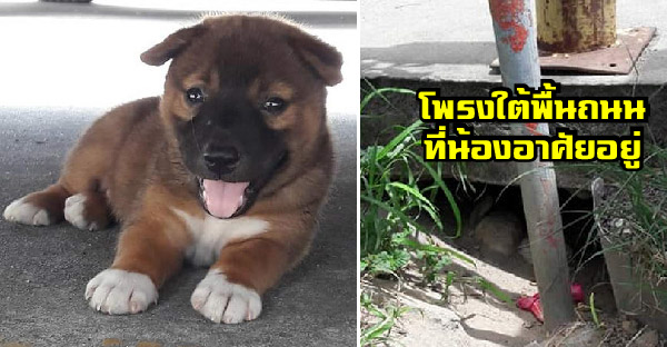 ลูกหมาจรข้างถนน เกิดในโพรงใต้พื้น เหลือเพียงตัวสุดท้าย ก่อนโชคดีมีคนใจบุญรับไปเลี้ยงแล้ว