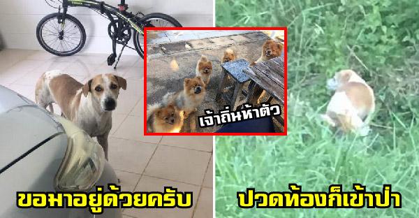 น้องหมาผอมโซหลงเข้าบ้านทาสหมาวันฝนตก ฉายแววเก่ง ฉลาด แสนรู้ กว่าหมา 5 ตัวที่บ้านซะอีก