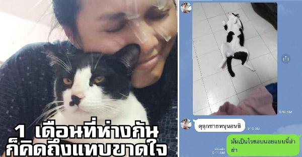 เมื่อสาวที่เคยโดนแมวตะปบ 85 เข็ม ต้องไปอยู่ต่างประเทศ ความคิดถึงก็ถามหาแมวตัวนั้น