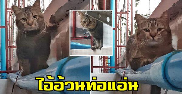 """เปิดตัว """"ไอ้อ้วนท่อแอ่น"""" แมวสลิดขาจรที่ยากจะเข้าใกล้ เกลี้ยกล่อมแล้วแต่ไม่เคยสนใจเลย"""