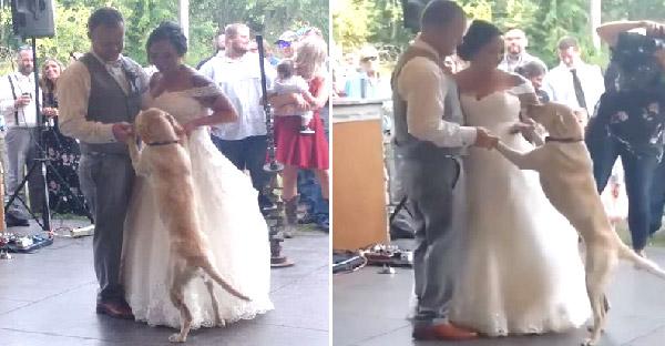 สุนัขร่วมเป็นพยานรักในวันแต่งงาน และไม่คาดคิดว่ามันจะเต้นรำกับบ่าวสาวเป็นครั้งแรกด้วย