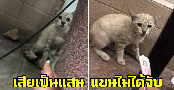 สาวจีบแมวเซเว่น เสียขนมแมวเลียก็แล้ว แขนก็ยังไม่ได้จับ ล่าสุดมีน้องโผล่มาแจมด้วย