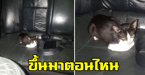 หนุ่มตกใจขับรถถึงบ้านเพิ่งรู้มีลูกแมวนั่งเบาะหลังมาด้วย แถมชาวเนตเจอเหตุการณ์คล้ายๆกันเพียบ
