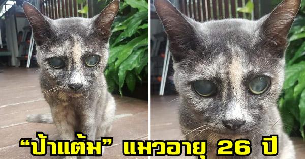 """""""ป้าแต้ม"""" แมวอาวุโสอายุ 26 ปี ที่เคยหยุดหายใจไปแล้ว แต่กลับมามีชีวิตได้อีกครั้ง"""