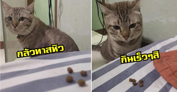 น้องแมวเป็นห่วงทาสที่นอนป่วย จึงคาบอาหารเม็ดมาให้ถึงเตียง เพราะกลัวไม่มีอะไรกิน