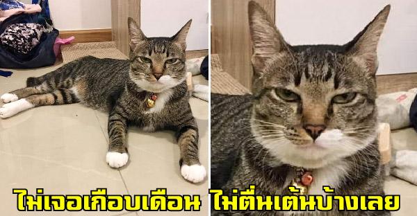 สาวฝากน้องเลี้ยงแมวเกือบเดือน รีบกลับมาด้วยความคิดถึง แต่เจอสีหน้าน้องเฉยชาแบบสุดๆเข้าให้