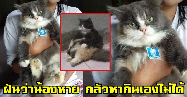 สาวฝันว่าแมวหาย ห่วงเปอร์เซียจะหากินเองไม่ได้ ร้องไห้จนสะดุ้งตื่นถึงรู้ว่าแค่ฝันไป