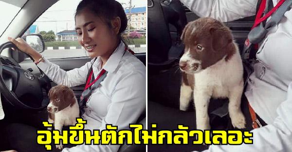 ลูกหมาวิ่งหนีหมาโตหลบข้างล้อรถสาว เธอจึงอุ้มขึ้นรถและวางบนตักโดยไม่กลัวเลอะ แถมยังหาบ้านให้อยู่ด้วย