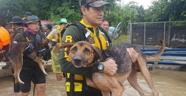 เพราะทุกชีวิตมีค่า ไทด์ เอกพันธ์ และทีมงานร่วมกตัญญู ช่วยชีวิตสุนัขหนีมวลน้ำท่วม จ.ร้อยเอ็ด