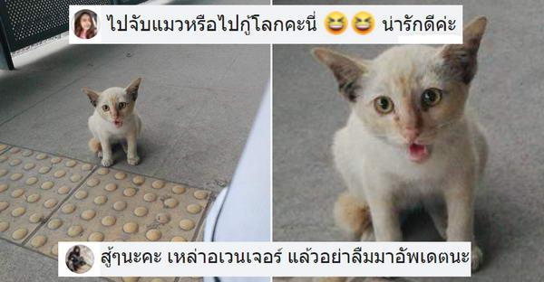 สาวขอวิธีจับแมวจรกลับบ้าน ตามจีบเป็นเดือนยังไร้ผล ทาสแมวจึงนัดรวมตัวประหนึ่งต้องไปกู้โลก