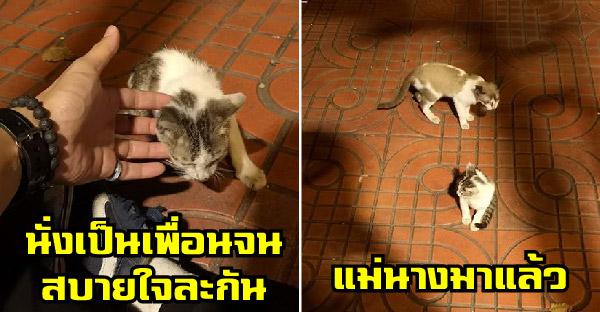 หนุ่มช่วยลูกแมวจากถนน แต่น้องฝืนกลับไปท่าเดียว จึงต้องอยู่เป็นเพื่อน กลายเป็นมหากาพย์ความเฮฮาไป