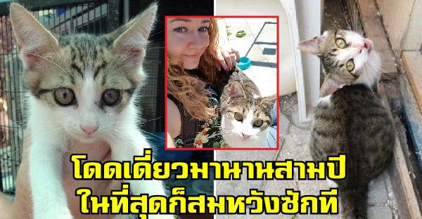 ลูกแมวโดดเดี่ยวในศูนย์พักพิงสัตว์นานสามปี ได้สัมผัสรักแท้ครั้งแรกในชีวิตจากสาวชาติ