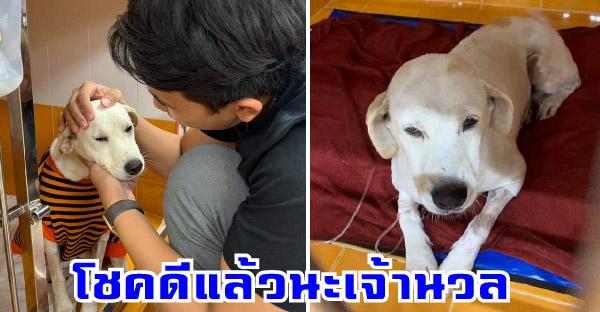 หมาจรในหมู่บ้านถูกรถชน คนขับรักษาจนหายดี พร้อมจะหาบ้านให้ แต่ทุกคนในหมู่บ้านขอดูแลเอง