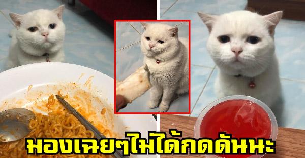 เมื่อสาวโพสต์เจอแมวนั่งกดดันเวลากินข้าวทุกมื้อ กลายเป็นภาพเฮฮาในกลุ่มทาสแมว