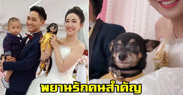 ทั้งลูกหมาลูกคนร่วมเป็นพยานรัก ในงานแต่งงานสุดอบอุ่น