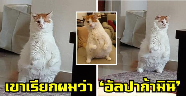 'ซาอิด' อดีตแมวจรซาอุ ขาหน้างอแขนหักศอกและตาบอด เวลาร้องเมี๊ยวจะร้อง 'แอ๊ว แอ๊ว' แทน