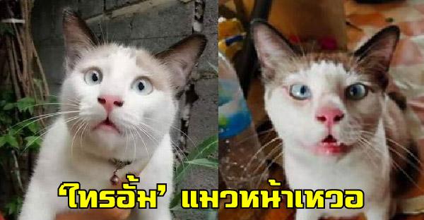รู้จัก 'ไทรอั้ม' แมวหน้าเหวอ ที่แฟนคลับถามหาเพราะความฮาล้วนๆ