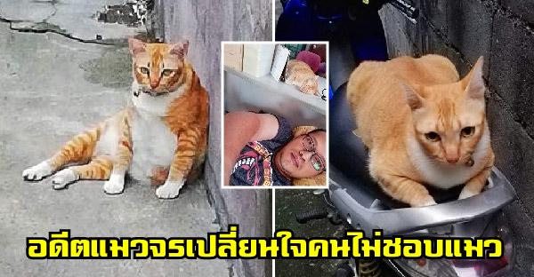 'อ้วน' อดีตแมวจรจัด ที่ทำให้คนไม่ชอบแมว เปิดใจยอมรับตัวตนที่แท้จริงได้