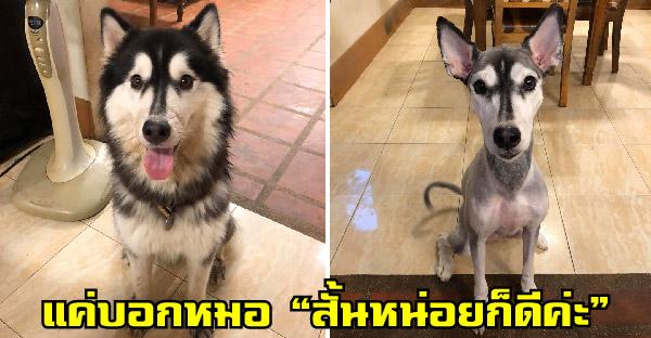 สาวพาไซไปตัดขนบอกหมอ 'สั้นหน่อยก็ดีค่ะ' ทำให้จากไซกลายเป็นหมาไทยทันที