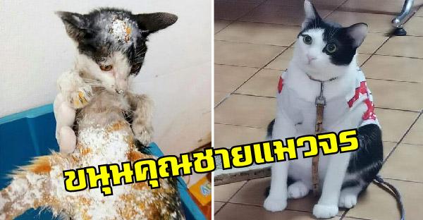 เรื่องราวของ 'ขนุน' อดีตแมวจรผอมแห้งและแผลเต็ม ก่อนคนใจดีรับมาดูแลจนกลมสมชื่อ