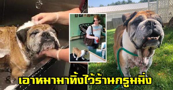 คนใจร้ายพาหมาป่วยไปอาบน้ำที่ร้านกรูมมิ่ง ก่อนจะทิ้งเอาไว้และไม่เคยกลับมาอีกเลย