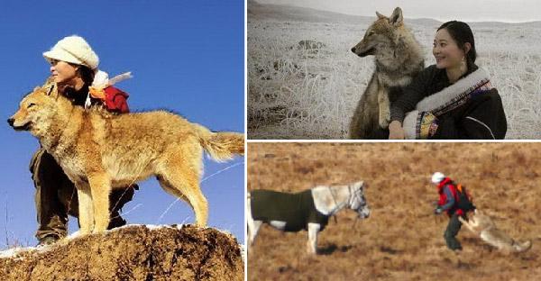 หญิงสาวช่วยหมาป่าในวัยเด็ก และมันกลับมาใช้ชีวิตเคียงข้างและไม่เคยลืมเธอตลอดชีวิต