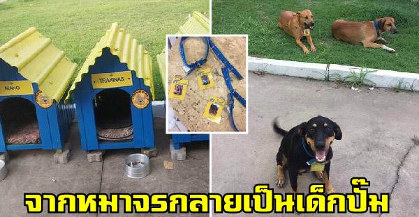เจ้าของปั๊มรับหมาจรจัดสามตัวเป็นเด็กปั๊ม ทำป้ายชื่อห้อยคอแถมสร้างบ้านให้อยู่ด้วย