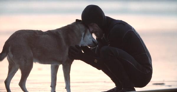 สารคดีสุดซึ้งที่เจ้าของมอบให้สุนัข ก่อนมันจะจากไปอย่างสงบ